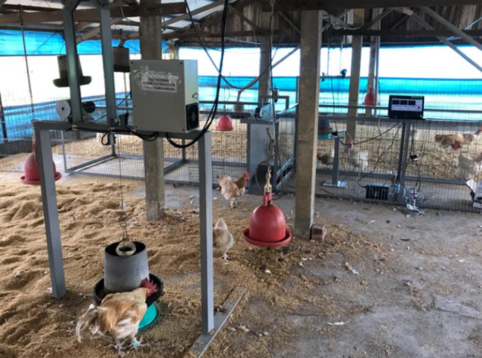 圖1、種雞篩選校正試驗系統,可取得五方向種雞影像