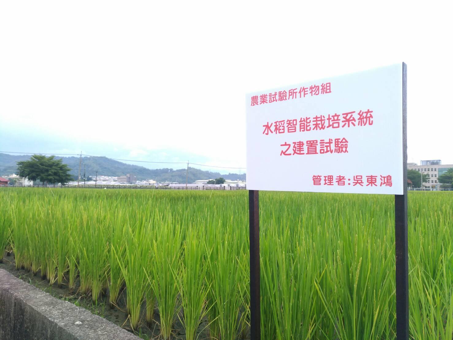 水稻智能栽培系統建置試驗田區