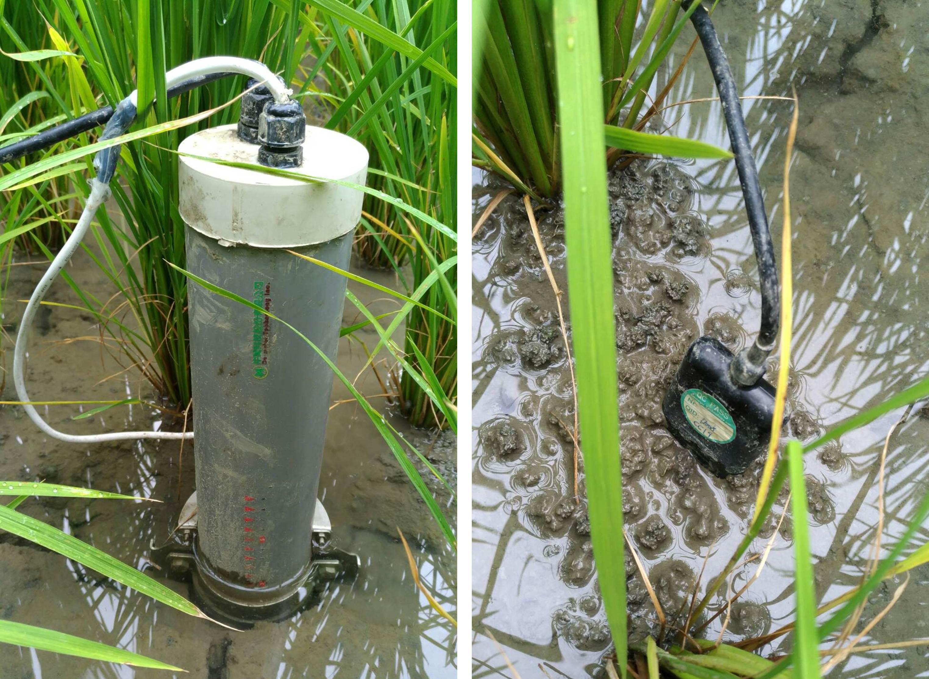 水位計與電導度計,即時監控田間水位與電導度變化