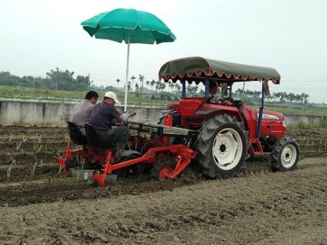 曳引機附掛式芋苗種植機作業情形