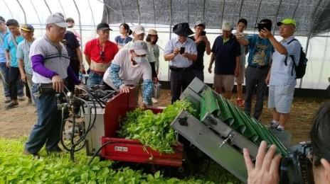 電動葉菜散裝收穫機收穫情形