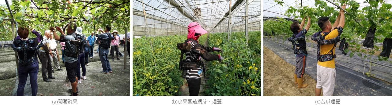 圖2、農事人員穿戴省力機具進行棚架類農事工作